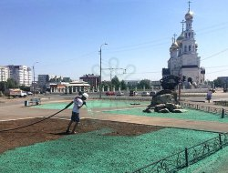 В столице Хакасии красят газоны»